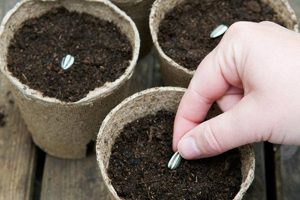 Grow-Your-Own-Seedlings